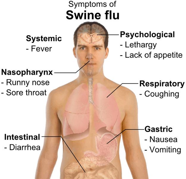 Svininfluensan ökar i Thailand