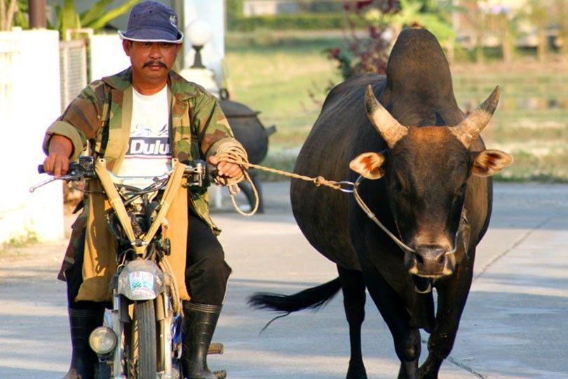 Buffel soppatorsk i Thailand.